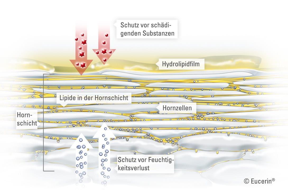Schön Schichten Der Kopfhaut Anatomie Galerie - Anatomie Von ...