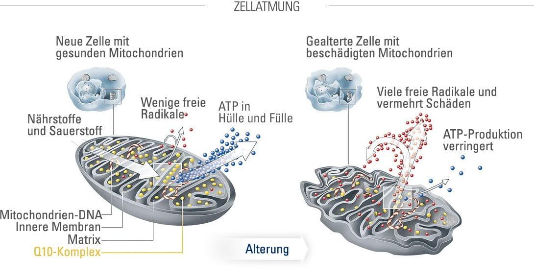 Freie Zellen